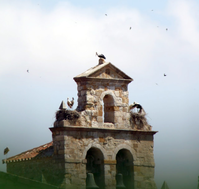 Zamora-Cicogne