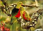 Betapa Cantiknya Kejadian Burung-burung...