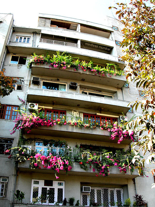 flowering plants in balcony in mumbai by kunal bhatia