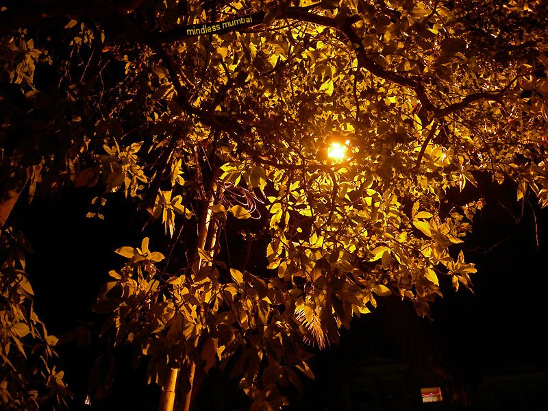 tree by night by kunal bhatia