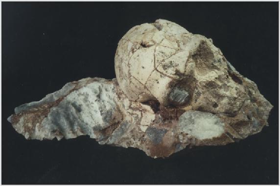 απόλυτη χρονολόγηση βράχων και απολιθώματα 8,4