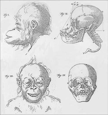 Petrus Camper, Natuurkundige Verhandelingen over den Orang Outang; en eenige andere Aap-soorten. Over den Rhinoceros met den Dubbelen Horen; en over het Rendier (Amsterdam: Meijer en Warnars, 1782