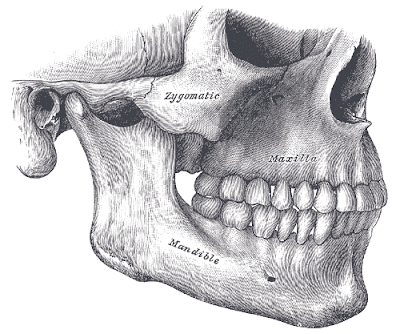 Relationship between the maxilla and the mandible