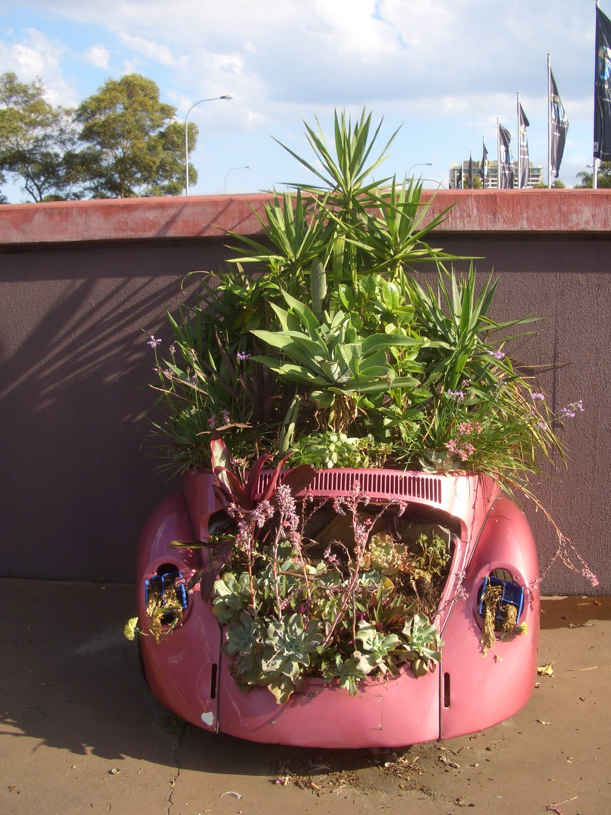 Small Car Planters : Sydney city and suburbs moore park eastern distributor