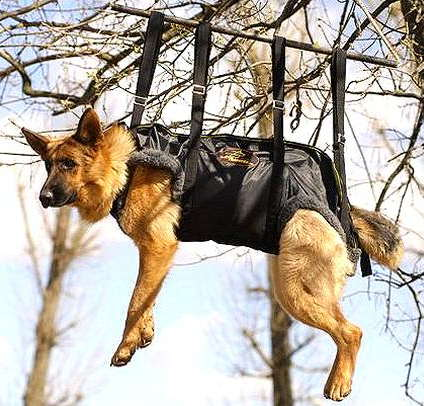 Russian Special Forces And Dog Training Pictures Of Dogs
