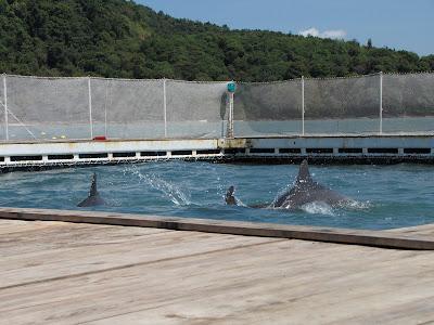 dolphins+3.jpg