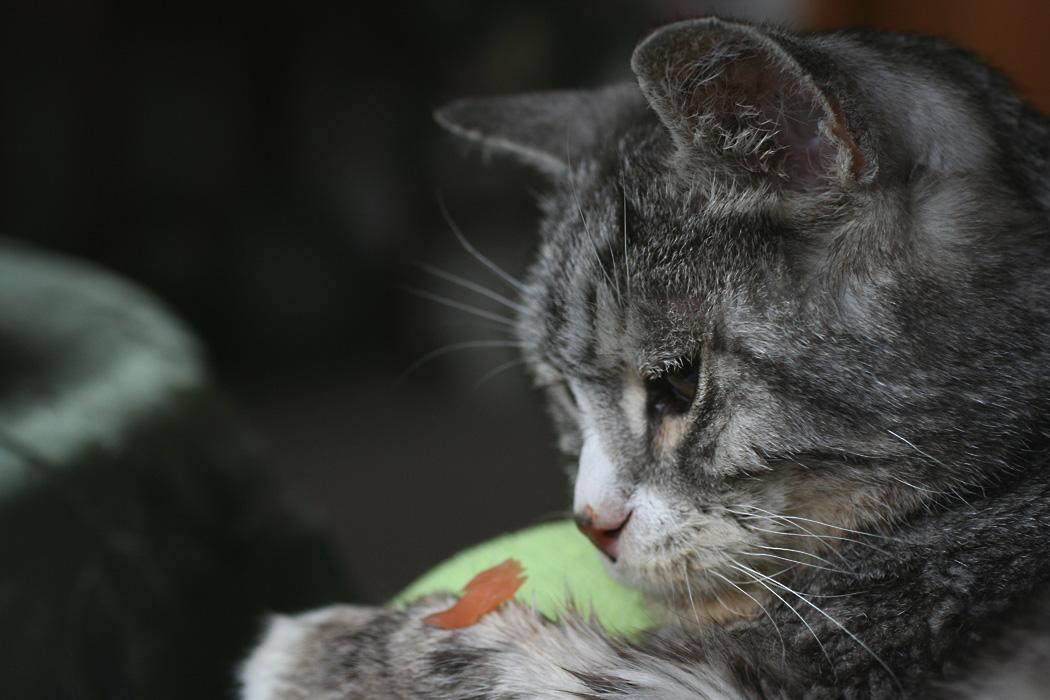gehen katzenmilben auf menschen