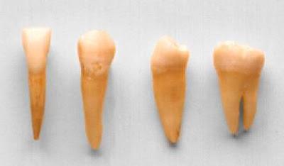 types-of-teeth