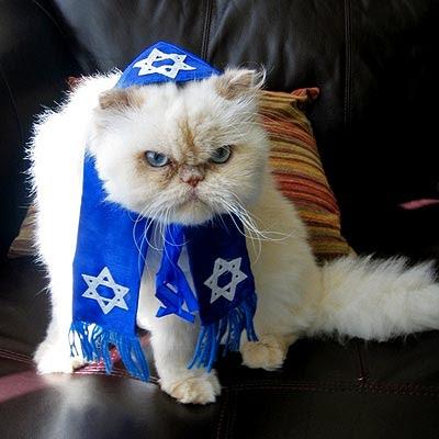 Catsparella Cats Celebrating Hanukkah