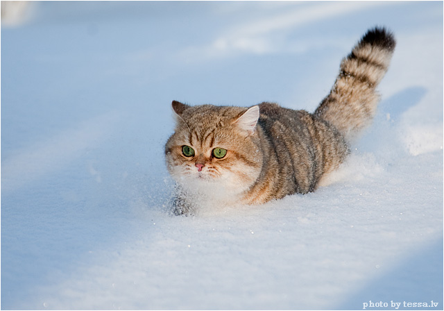 cat in snow - Daily Picks and Flicks |Cat Snow Flakes