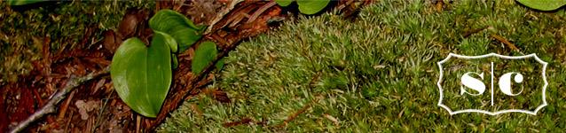 seymour cornelius