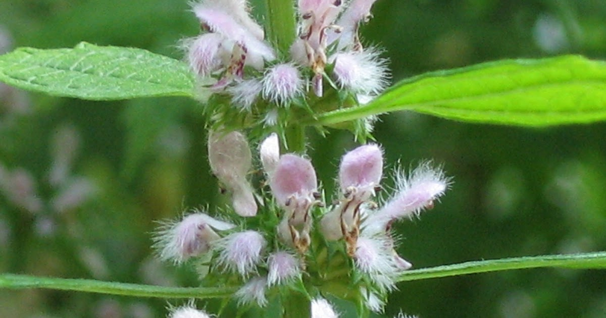 Nature S Herbal Trim Tea Infusion Reviews