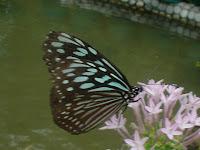 Le pays des papillons