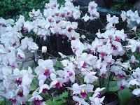 Et les orchidées...
