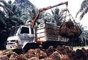 Crude Palm Oil and Palm Kernel Oil