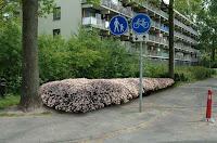 Bron: Rapport Vaste planten in Nederlands openbaar groen