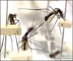 Dengue situation in East Coast affects turnout at showflats