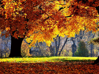 Autumn Falls wallpaper and photo