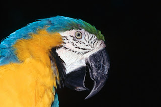 Parrot in The Dark
