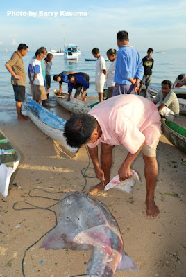 STOP Makan Sirip Ikan Hiu, sangat merusak lingkungan.