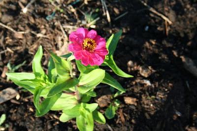 Garden Update | myhumblekitchen.com