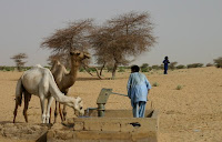 water hole, camels and lots of sand