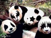 KISS posing as cuddly panda bears