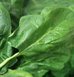 How Spinach Helps To Improve Eyesight