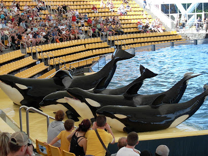 LORO PARK: ORCAS SHOW