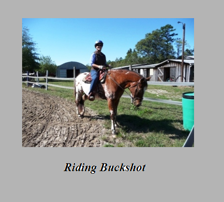 A Thousand Pounds of Fragile Horse: Buckshot is Better ...