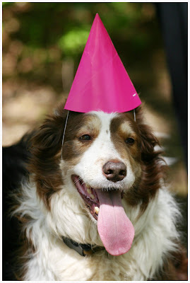 Once We Had Finished Falling All Over Ourselves Laughing At Dogs In Birthday Hats Because Yes Are 11 Then Commenced Further Torture And