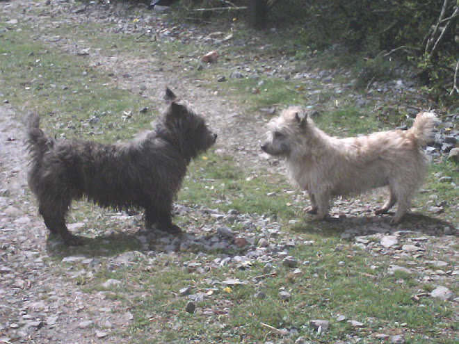 Bailielands Irish Glen Of Imaal Terriers & Jack Russells