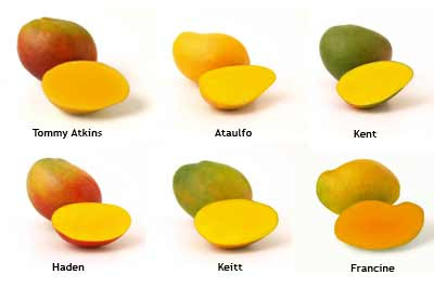 Mangoes Pictures With Names