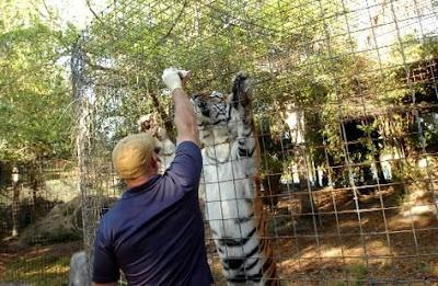 Operant Conditioning at Big Cat Rescue