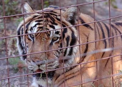 d12ea3104e2a4e Schools Raising Money To Feed Lions