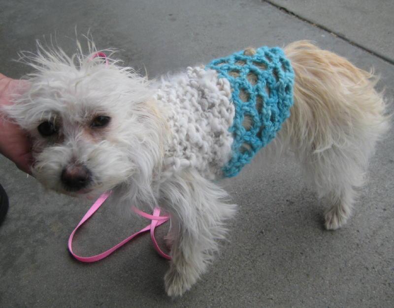 Northern California Angora Guild: Angora Dog Sweater