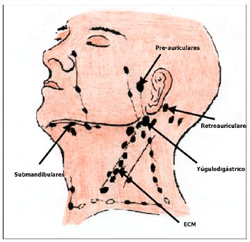 LINFÁTICOS DEL CUELLO | Dermocosmiatria