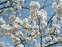 Sakura_2007.04.06