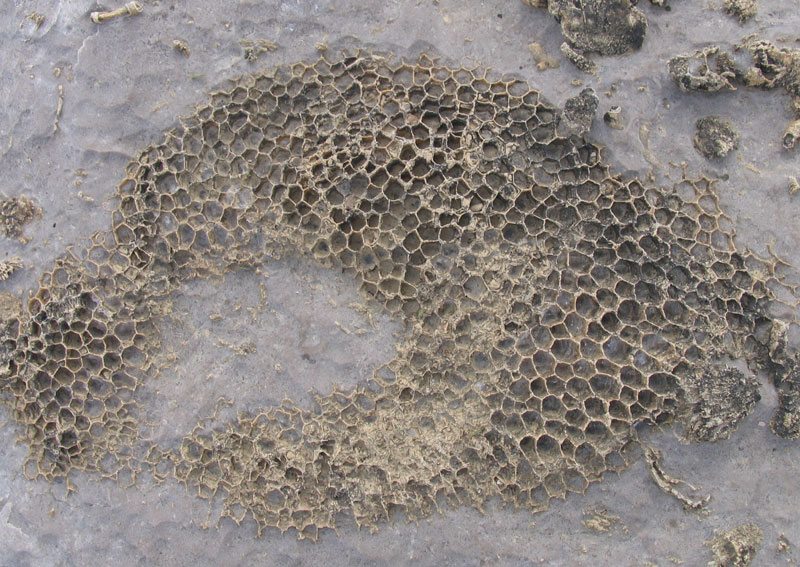 Louisville Fossils And Beyond Louisville Fossil Bed Hikes