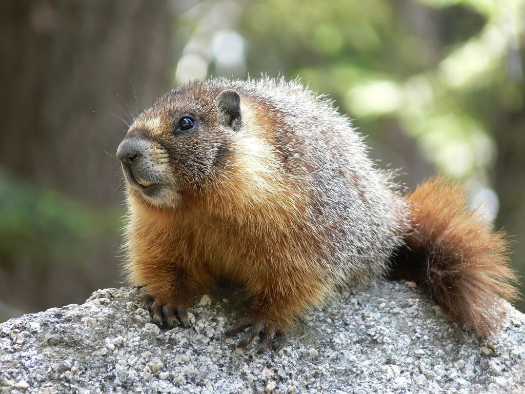Bishop Alan's Blog: Day 2: The Marmots are Coming