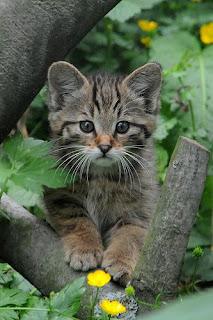 Cat,bengal cat,cat breeds,wild cat,house cat,cat cage