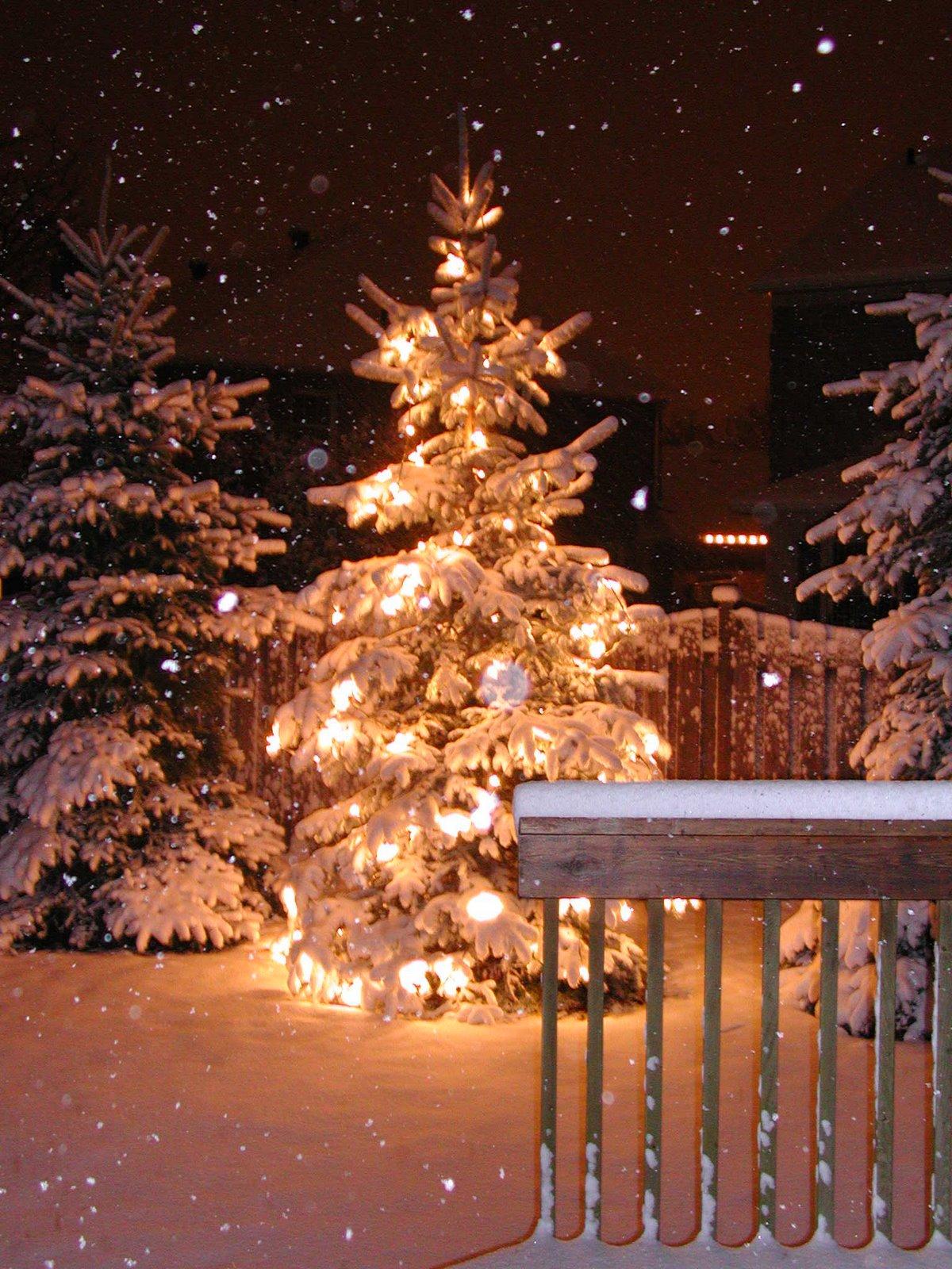 [Christmas+outside.jpg]