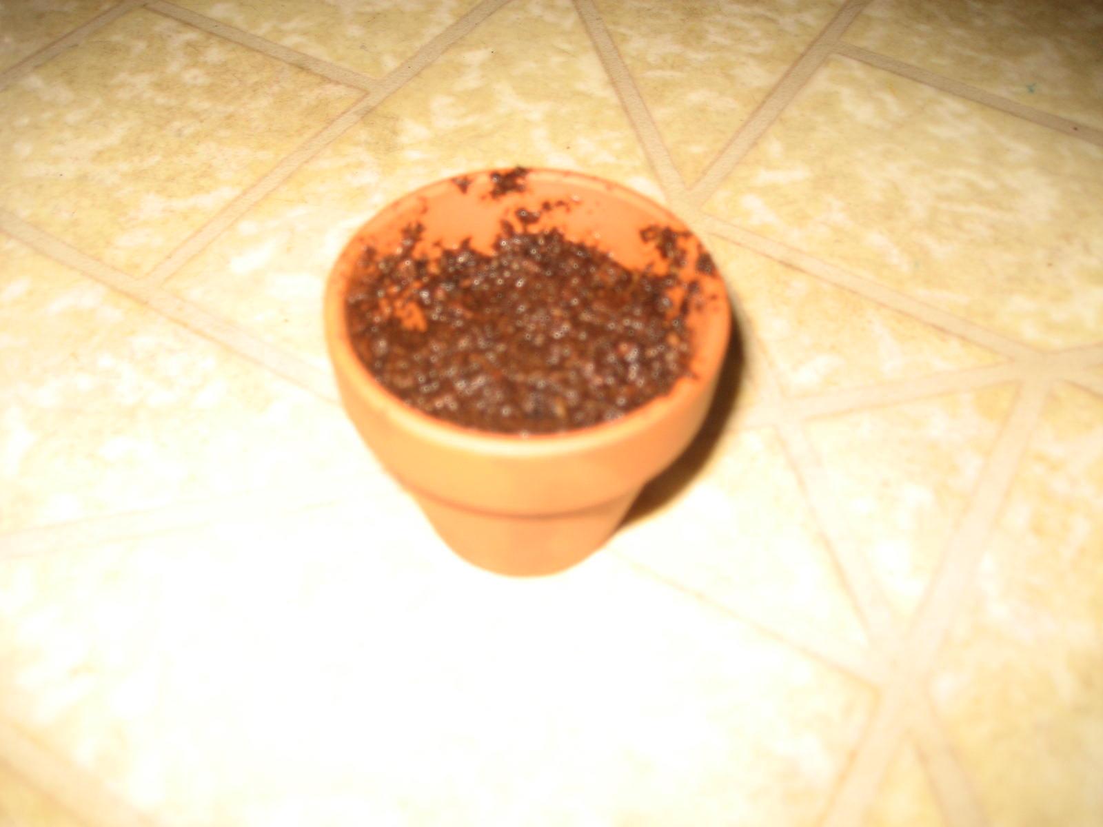 [Planting+004.jpg]