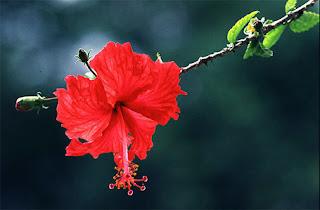Hibiscus Garden kuala Lumpur