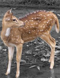 Deer Park kuala Lumpur