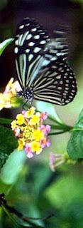 Butterfly Park kuala Lumpur