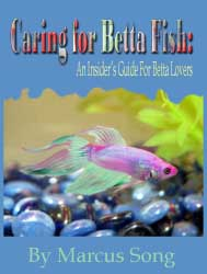 http://aquanfish.blogspot.com/betta splenden care
