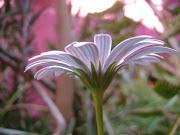 Las flores de mi patio