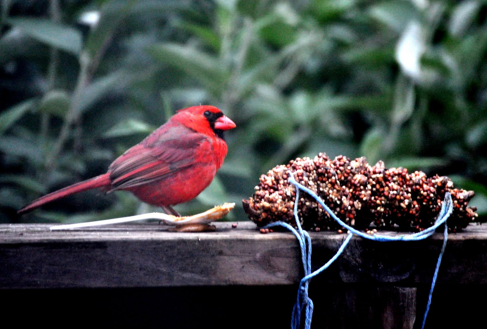 Fun Projects For Kids Pine Cone Bird Squirrel Feeders