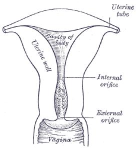 Alabama Fertility Update January 2011